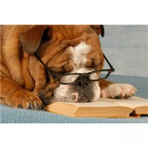 glasses_book_bulldog