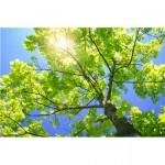sunshine_tree