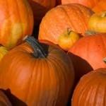 pumpkins_fall